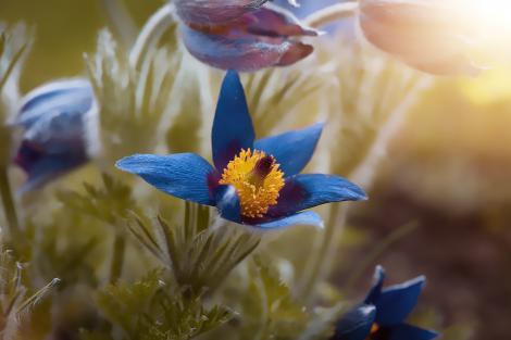 Calendar Pentru Plantarea Bulbilor de Flori in Gradini
