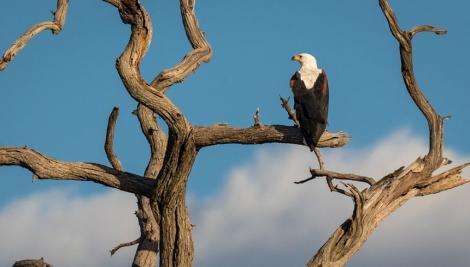 Sute de vulturi din specii pe cale de dispariţie au murit după ce au fost otrăviţi în Botswana