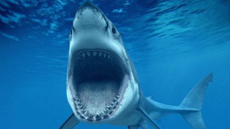 O femeie a fost ucisă de trei rechini