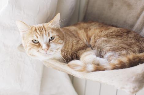 Îngrijire pisici: 6 semne că pisica ta este bolnavă și trebuie să mergi la veterinar
