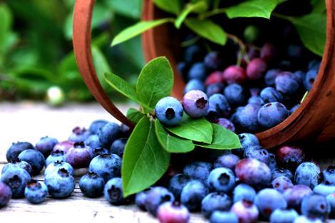 Ce beneficii au afinele pentru sănătate