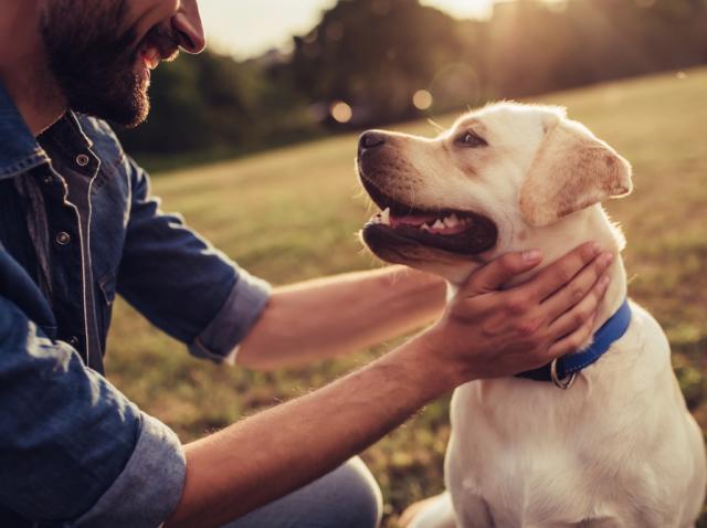 Cum să ai grijă de câinele tău pe timpul verii - 4 sfaturi de care să ții cont