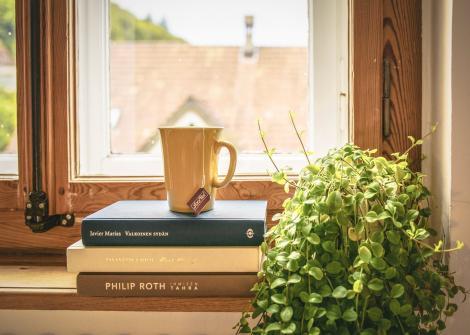 Plante benefice în apartament, pe timp de vară. Lista recomandărilor NASA