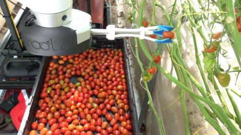 Agricultura în era tehnologiei. A fost inventat robotul care știe când legumele sunt coapte și le culege. Video