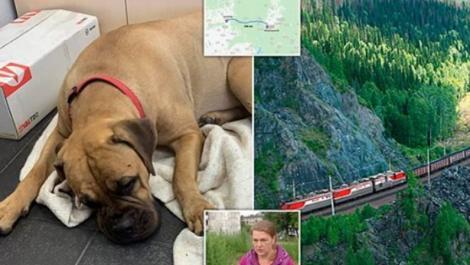 """O cățelușă a mers 200 de kilometri, ca să se întoarcă la stăpâna care a părăsit-o! """"Avea lacrimi în ochi și lăbuțele rănite"""" - Foto"""