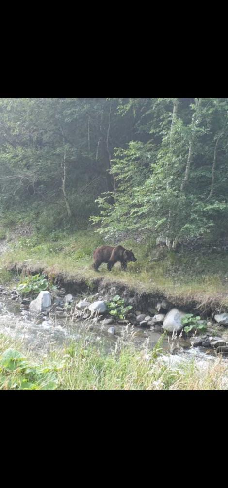 Au hrănit un urs, în Argeș, și au primit o amendă usturătoare! Câți bani vor scoate din buzunare, după ce au vrut să facă o faptă bună