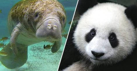 Pentru prima dată în istorie numărul animalelor amenințate cu dispariția este de peste 100.000 de specii
