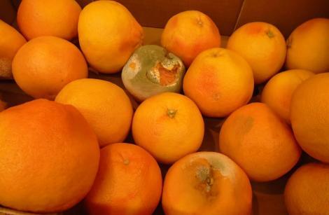 Ministerul Agriculturii anunţă că a dat amenzi de peste 90.000 de lei comercianţilor de legume şi fructe