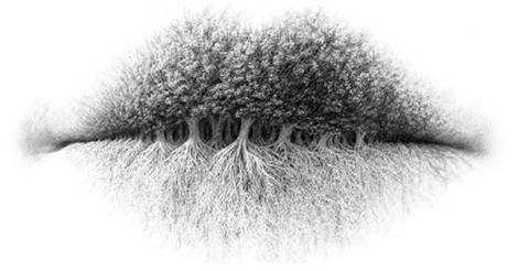 Iluzie optică: Ce vezi în această imagine spune multe despre personalitatea ta
