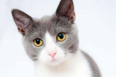 Primul recensământ al animalelor de companie va avea loc în București! Cei care vor refuza vor fi amendați!