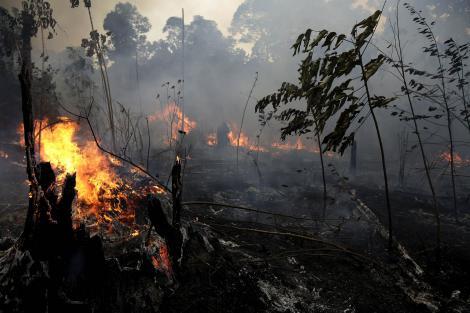 Imagini sfâșietoare! Incendiile din Amazon, mai periculoase decât arme de distrugere în masă (VIDEO)