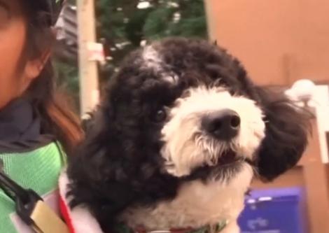 Iubitul i-a cumpărat un câine, dar i-a pus o condiție! Femeia l-a ascultat și a devenit vedetă peste noapte!