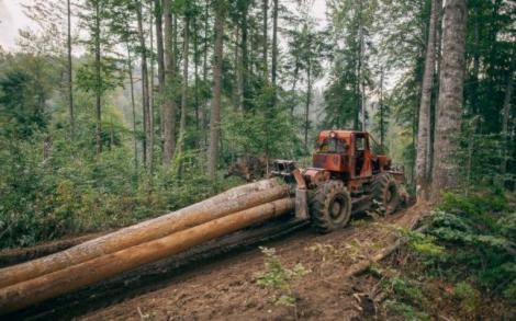 """Decizie incredibilă! Tăierea pădurilor, interzisă în următorii zece ani într-o țară europeană! Pedepse uluitoare pentru cei care încalcă regula! """"Suntem obligați"""""""