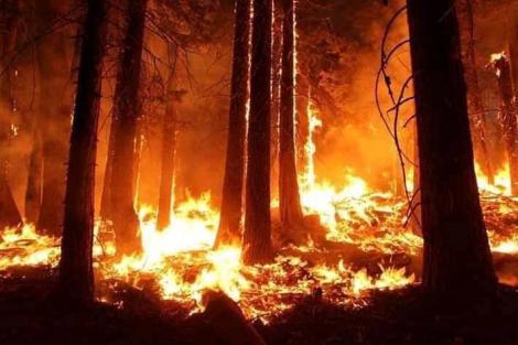 Incendiile din Amazonia s-au restrâns uşor, dar un boicot internaţional din partea companiilor este în creştere