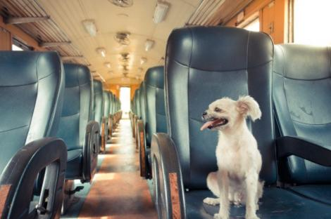 Cum transporți animalele de companie cu trenul? Regulile CFR Călători