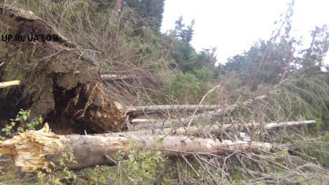 Iaşi: Un pădurar de la Ocolul Silvic Paşcani a fost găsit mort în pădure, existând suspiciuni că a fost victima unei agresiuni