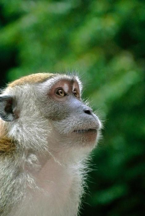 Poliţiştii din Bucureşti au găsit două maimuţe şi o cămilă într-o locaţie din Sectorul 5