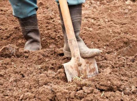 Un bărbat din Bistrița săpa în grădină atunci când a dat peste ceva colosal! Ce a găsit în pământ