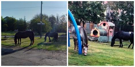 """Nu, nu e glumă! Doi oameni și-au lăsat caii să pască într-un parc din Timișoara! Polițiștii: """"Cei certați cu legea și cu bunul simț să respecte legislația!"""""""