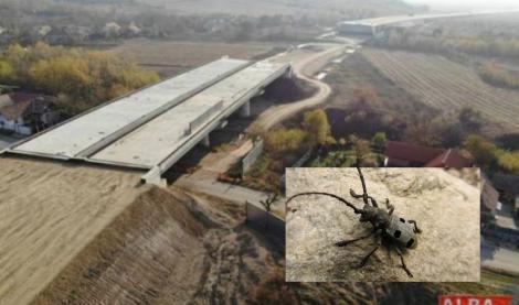 """Am rămas fără Autostrada Sibiu-Pitești din cauza unui...gândac! Nu, nu e glumă: """"Sunt lucruri halucinante"""""""