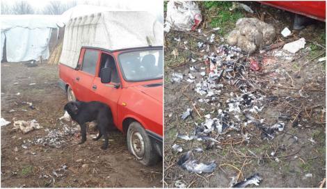 """""""O știre ce doare!"""" Bărbat din Brăila, suspectat că a mâncat o specie rară. Ce a făcut cu resturile animalului protejat prin lege este revoltător"""