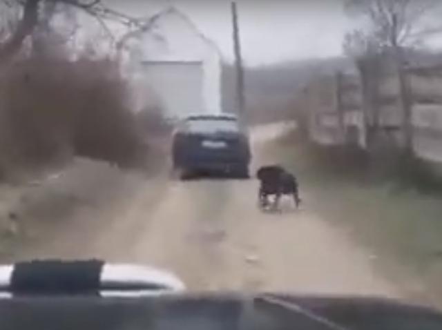 Sfâșietor! Câine legat și târât în urma mașinii, în Alba! Animalul se zbate cu disperare | VIDEO