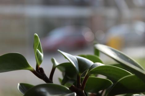 Vei avea cele mai frumoase plante de apartament, dacă vei folosi aceste trucuri