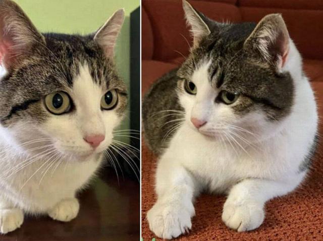 Pisică cu puteri vindecătoare, scoasă la vânzare. Cât costă felina și de unde poate fi achiziționată