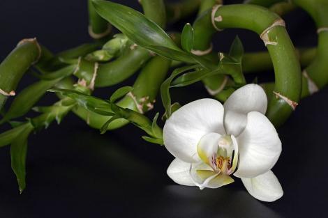 Plante pe care trebuie să le ai în casă! Ele atrag energia pozitivă și aduc prosperitate