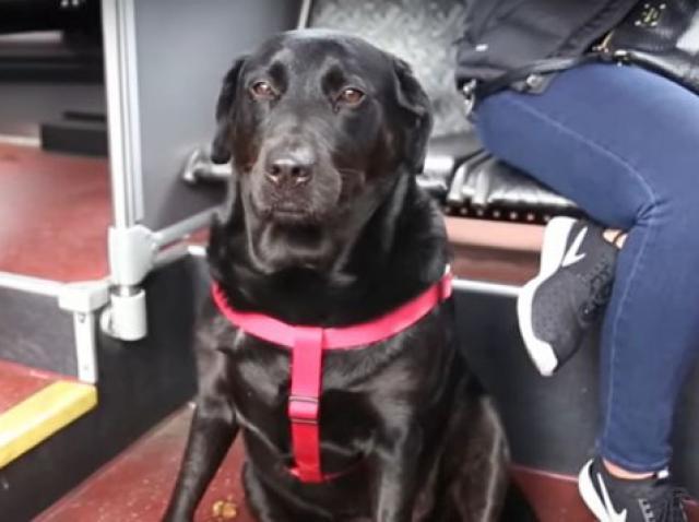 VIDEO - Acest cățel este special și unic! Povesteea a minunat o lume întreagă