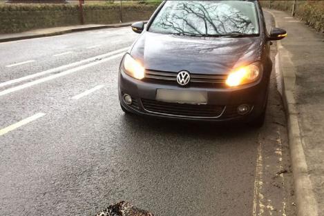 Șoferul speriat a crezut că a dat peste o pisică lovită, dar apoi s-a rușinat! Ce a găsit, de fapt