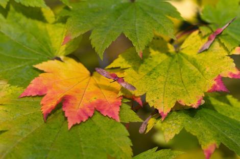 Adevăratul motiv pentru care frunzele își schimbă culoarea toamna. De ce îngălbenesc