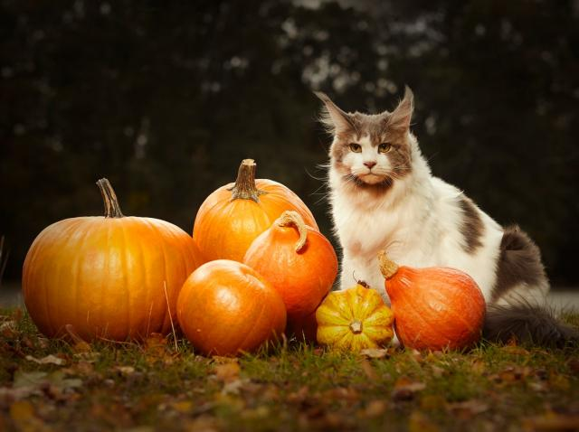 Horoscop. Ce este bine să facem în seara de Halloween, în funcţie de fiecare zodie în parte