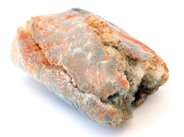 paine mucegaita pe fundal alb