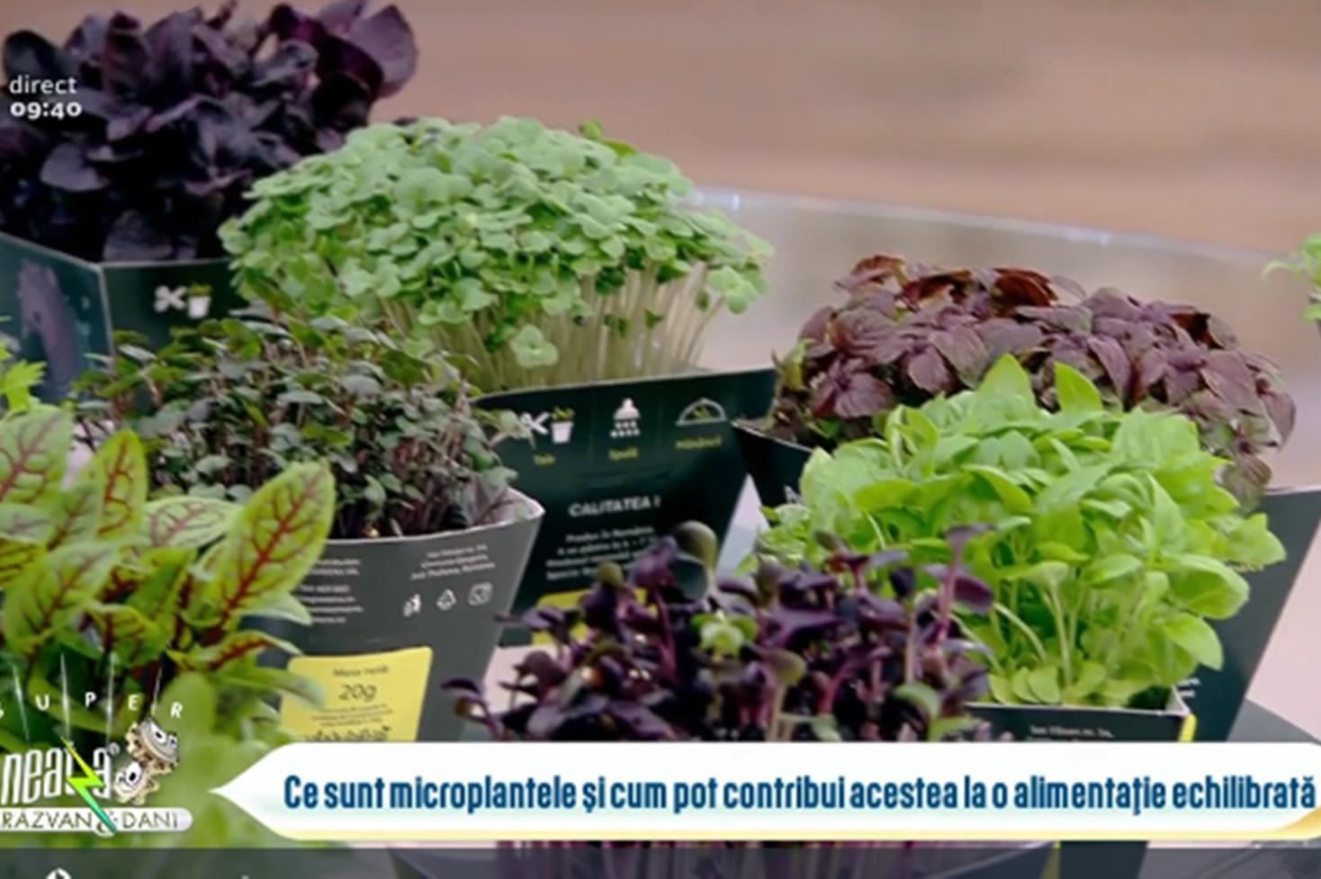 Rolul microplantelor în preparatele culinare și a alimentației echilibrate