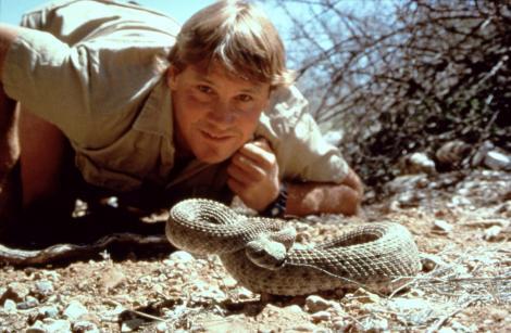 Steve Irwin, în timpul unor filmări de la un documentar