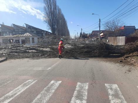 Elevii unei clase de la un colegiu din Ploieşti, evacuaţi după ce un copac a căzut pe gardul unităţii/ O femeie a fost rănită de bucăţi de tencuială desprinse de pe un bloc