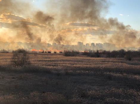 Incendiu pe 20.000 de metri pătraţi, în Delta Văcăreşti/ ISU Bucureşti-Ilfov intervine cu mai multe autospeciale