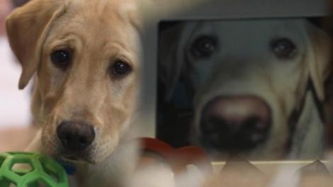 """O familie a plătit 50.000 de dolari ca să îl cloneze pe câinele care le-a salvat viața """"Are aceeași personalitate"""""""