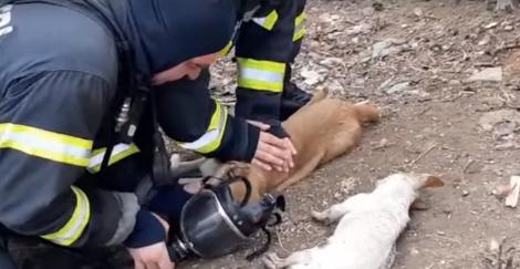 """Plângi și aplauzi! Și pompierii noștri sunt eroi! Momentul emoționant când resuscitează un câine! """"Hai, Bobiță. haide tati!"""""""