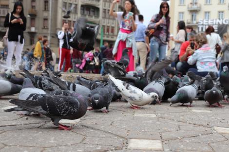 5 evenimente din Timișoara pe care să nu le ratezi în 2020