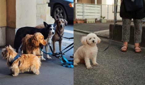 Situație hilară! Italienii au început să închirieze câini ca să poată ieși din casă. Pe acest motiv, nu pot fi amendați de autorități
