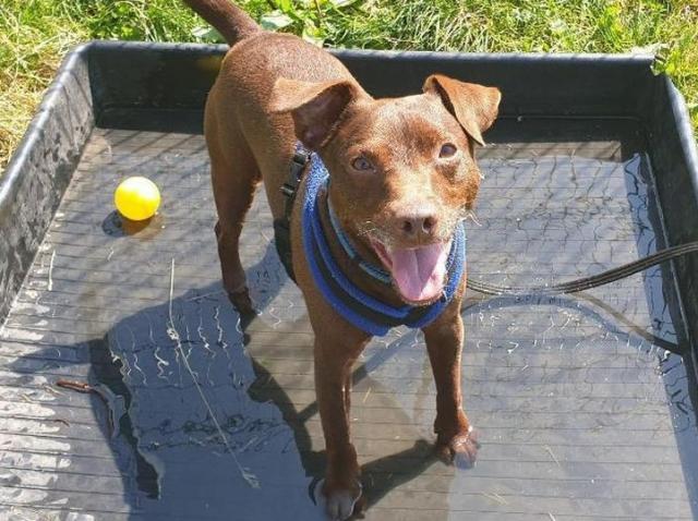 """""""Cel mai singur câine al Marii Britanii!"""" A așteptat 500 de zile pentru a-și găsi o nouă casă, după ce stăpânul său a murit"""