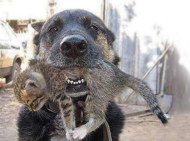 Câinele erou! Toată lumea fugea de incendiu, dar el a intrat în flăcări, ca să-și salveze prietenul de joacă!