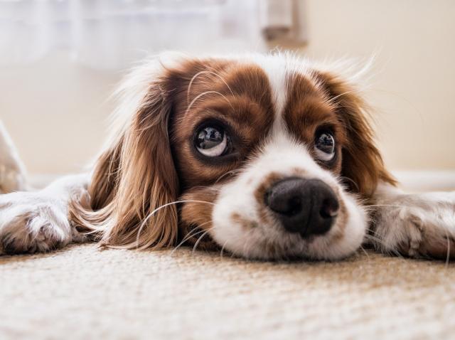 Cele 8 întrebări la care trebuie să răspunzi înainte să adopți un animal de companie