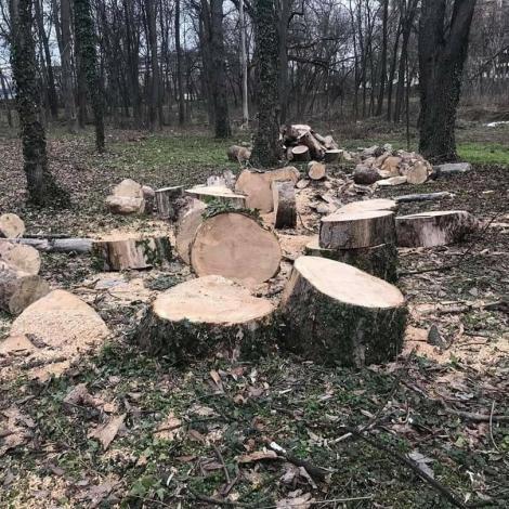 Percheziţii în patru judeţe, la persoane bănuite că ar fi tăiat fără drept arbori din fondul forestier naţional şi ar fi folosit avize de însoţire false