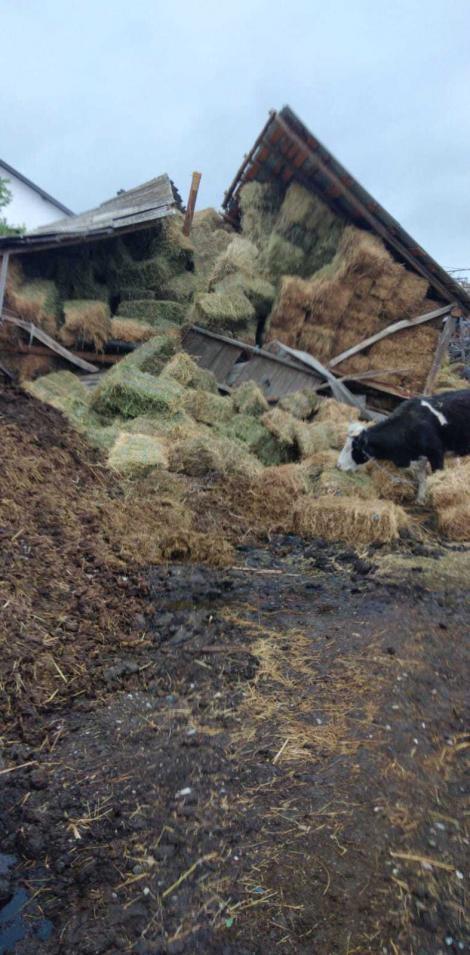 Neamţ: Un adăpost de animale s-a prăbuşit peste un bărbat şi 20 de vite/ Pompierii au fost chemaţi să intervină
