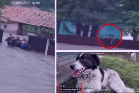 Bătrâni scoși din apa până la gât, din case care s-au dărâmat în urma lor. Cățelul a înotat până la stăpâni. Imagini apocaliptice în România