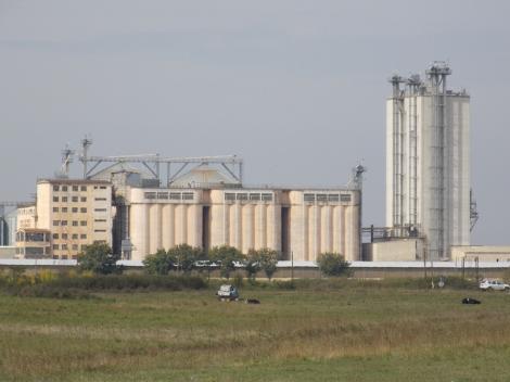 Timiş: 95 de cazuri de COVID-19 la angajaţi ai fermelor Smithfield