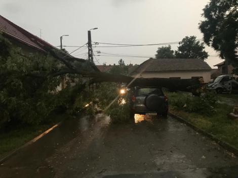 Copaci prăbuşiţi pe maşini şi pe carosabil şi case inundate, la Arad, în urma unei furtuni - FOTO, VIDEO